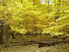 Fall color in the forest preserve at Morton Grove, IL Morton Grove, Forest Preserve, Rural Area, Vineyard, Wildlife, Landscape, Gallery, Fall, Outdoors