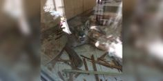 What Happens When A Mountain Lion Sneaks Into Your Home While You're Cooking Breakfast -- Cougar break-in