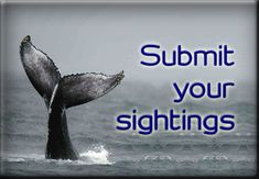 Become part of the largest cetacean database in the UK!!