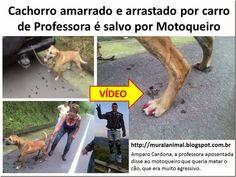 Mural Animal: Cachorro amarrado e arrastado por carro de Profess...