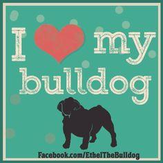 I love my bulldog - quote - by Ethel The English Bulldog, cutest in Chicago! https://www.facebook.com/EthelTheBulldog #bulldog #quotes #animal