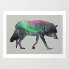 Buy Wolf In The Aurora Borealis Art Print by Andreas Lie. Worldwide shipping available at Society6.com. Just one of millions of high quality products available.