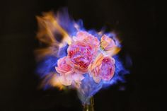 Love Letters: Flowers Engulfed by Fire by Jiang Zhi