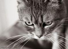 © copyright Marco Galli. Con Gatto Cenerentola. by Galli Marco il fotografo dei gatti on 500px