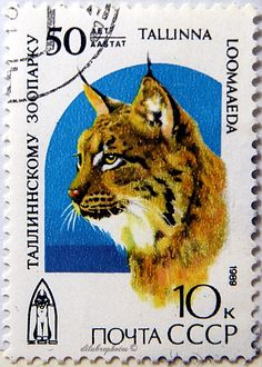 Asia Stamps Aserbaidschan 2 Cover Wild Cat Leopard Lunx Katze Wwf