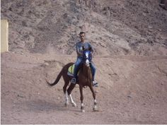 Sonstiges Freizeitbild - Sharm el Sheikh Pferde Horse Pony