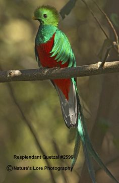 Quetzal Reference#Repin By:Pinterest++ for iPad#