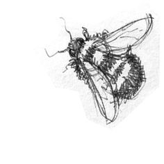 scribbly bee. http://www.softgallery.dk/ www.circuslondonpr.com  ///// Apiary Supplies - Beekeeping Supplies - Honey Supplies found at Apiary Supply | www.apiarysupply.com