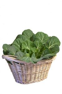 Leafy Greens Save Eyesight - The People's Pharmacy®