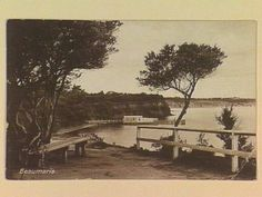 Beaumaris [picture] , State Library of Victoria Melbourne Suburbs, Big Country, Black Rock, Wall Decals, Sydney, Shots, Trees, Victoria, Australia