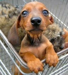 19 Stores Where I Can Shop With My Dachshund