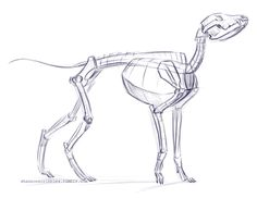 Quick dog skeleton. Looks like he is still waiting for that treat…