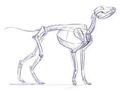 Dire Wolf Skeleton Studies by tursiart.deviantart.com on