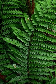 Fern - depth of color, maturity, strength