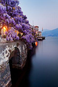 purple flowers over a bridge  -Sarah
