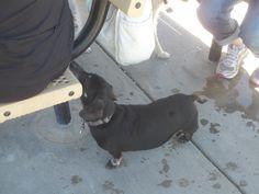 PT JULY 2014 NAMPA IDAHO DOG PARK.