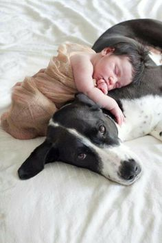 Adorable!  #doglovers #baby #photo #dogphotography