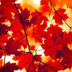 Beautiful natural colors - www.latchfarmstudios.co.uk Colour Inspirations for Latch Farm Studios new fused glass goodies