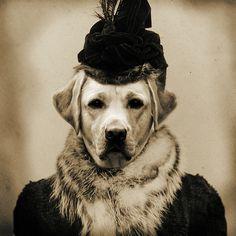 thegiftsoflife:    Madame Labrador