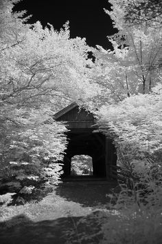 Covered Bridge that crosses Crystal River from the Red Mill to the Chapel in The Woods.  Photo by tiggs81972, via Flickr