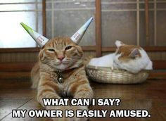 Lol...poor kitty!