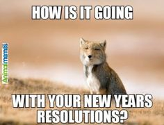 Animal memes New Year already...