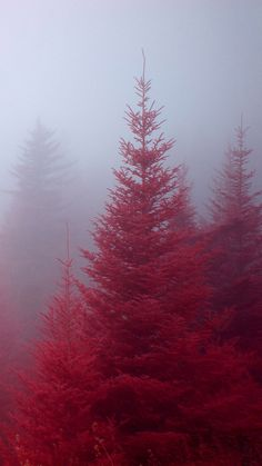 beautiful red nature forest iphone 6 wallpapers HD