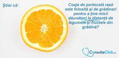 #StiaiCa #Healthy Orange, Healthy, Food, Essen, Meals, Health, Yemek, Eten