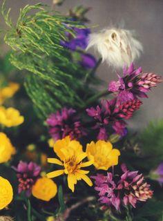 Ein Strauß Wildblumen, Foto: S. Kretschmer