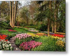Colorful World of Keukenhof. Flower Power Metal Print by Jenny Rainbow Beautiful Flowers Garden, Beautiful Gardens, Power Metal, Daffodils, Botanical Gardens, Spring Flowers, Fine Art Photography, Flower Power, Fine Art America