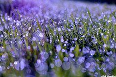 Purple Bokeh by Nick Hawkins on 500px