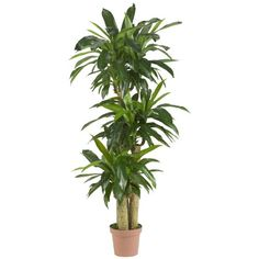 Nearly Natural 6584 Corn Stalk Dracaena Decorative Artificial Silk Plant, Green ** Learn more by visiting the image link.