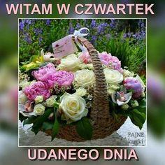 Good Morning, Cabbage, Vegetables, Thursday, Humor, Google, Pictures, Polish, Buen Dia
