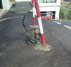 Tenerife. Lovely cat in mountain village.