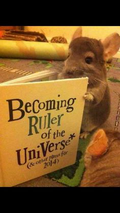 This little guy has big plans - Imgur