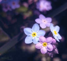 :: Forget me not :: by Whimsical-Dreams - Nourish Your Soul