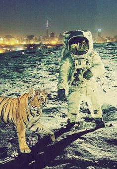 tigers live in the moon city