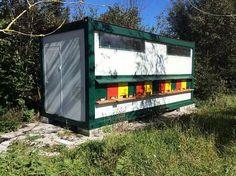 Bienencontainer - Bienenhütte Bienen Imker Bienenhaus. 4.031.310 Angebote. Günstig kaufen und gratis inserieren auf willhaben - der größte Marktplatz Österreichs.