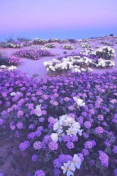 nice ✿⊱╮Natural elements: Purple paradise....