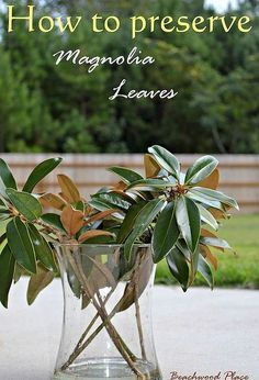I have been preserving my magnolia leaves for about a week now. It's super easy! All you need is: Magnolia leaves/branches Glycerin Water Containers Hammer In… Magnolia Wreath, Magnolia Leaves, Magnolia Centerpiece, Sweet Magnolia, Magnolia Flower, Floral Centerpieces, All You Need Is, Just In Case, Christmas Centerpieces