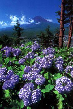 富岳百景 | 富士河口湖 総合観光情報サイト