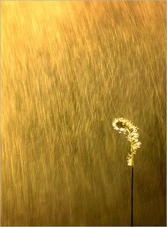 ♂ Gold / Golden solitude nature