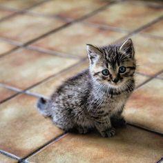 en söt katt                                                                                                                                                                                 Más
