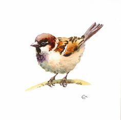 Watercolor Sparrow  Original Bird Illustration 7 by CMwatercolors
