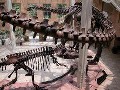 Fernbank Museum of Natural History---Atlanta, GA