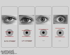 Anatomy For Sculptors - proportion calculator, store, services, video, links… Eye Anatomy, Human Anatomy Drawing, Drawing Eyes, Anatomy Art, Eyeball Anatomy, Eye Drawing Tutorials, Drawing Techniques, Art Tutorials, Painting Tutorials