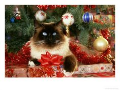 Cat Relaxing Under Christmas Tree