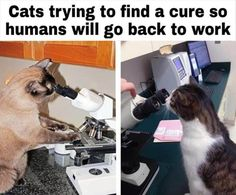 Funny Animal Memes, Funny Animal Pictures, Cat Memes, Funny Cats, Funny Animals, Funny Memes, Cats Humor, Jokes, Animal Funnies