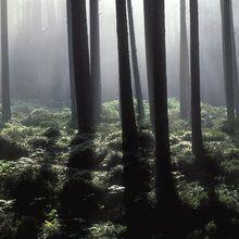 Fototapete - Backlit Forest