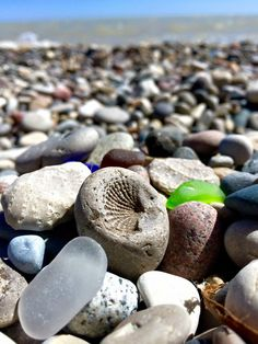 Fossil and glass – Beach glass jewelry Sea Glass Beach, Sea Glass Art, Beach Stones, Sea Glass Jewelry, Glasses Wallpaper, Hag Stones, Sea Glass Crafts, Sea And Ocean, Pebble Art